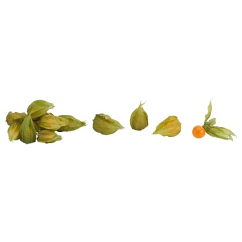 Exotic Island Physalis 100g
