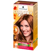 Schwarzkopf Country Colors Intensivtönung 49 Cognac Haselnuss 113 ml